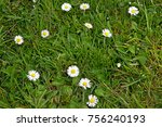 daisies growing in the grass | Shutterstock . vector #756240193