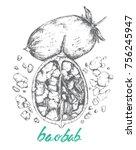 baobab fruit from adansonia... | Shutterstock .eps vector #756245947