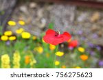 poppy flower with a petal which ... | Shutterstock . vector #756275623