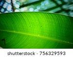 bright green leaf closeup | Shutterstock . vector #756329593