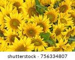 closeup of a sunflower bouquet | Shutterstock . vector #756334807