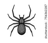Spider Black Arachnid On White...