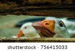 Curious Village Goose