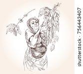 coffee harvesting. woman... | Shutterstock .eps vector #756443407