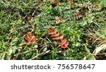 moss and small flora in spring... | Shutterstock . vector #756578647