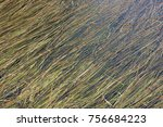 grass laying in the water | Shutterstock . vector #756684223