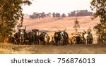 nguni cattle at sunset on a... | Shutterstock . vector #756876013