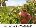 apple tree in garden | Shutterstock . vector #756909643