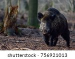 wild boar male in the forest ... | Shutterstock . vector #756921013