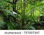flowers of seychelles islands | Shutterstock . vector #757007347