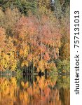 autumn scenery  colourful trees ... | Shutterstock . vector #757131013