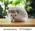 hedgehog in natural habitat | Shutterstock . vector #757196863