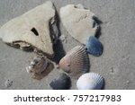 Broken Sand Dollar With Abalon...