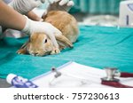 animal health care concept.... | Shutterstock . vector #757230613