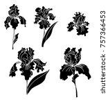 japanese iris flower set.hand... | Shutterstock .eps vector #757366453