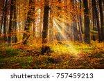 fairytale forest  deciduous... | Shutterstock . vector #757459213