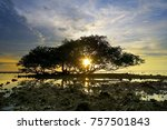 sunset from behind tree on the ... | Shutterstock . vector #757501843