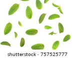 background image leaves and... | Shutterstock . vector #757525777