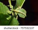 close up of middle instar... | Shutterstock . vector #757532137