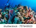 A Giant Porcupine Fish Swimmin...