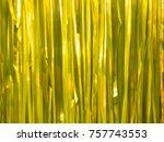 christmas golden rain... | Shutterstock . vector #757743553