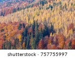 colorful forest  background .... | Shutterstock . vector #757755997