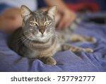 cute domestic cat smirking at... | Shutterstock . vector #757792777