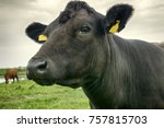 pasture on baltic sea shore .... | Shutterstock . vector #757815703