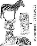 set of vector drawings on the... | Shutterstock .eps vector #757819123