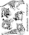 set of vector drawings on the... | Shutterstock .eps vector #757819147