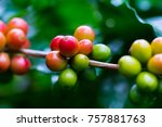 coffee beans ripening on coffee ... | Shutterstock . vector #757881763