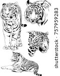 set of vector drawings on the... | Shutterstock .eps vector #757959283