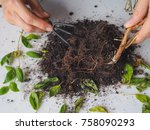 the decay of plant roots.... | Shutterstock . vector #758090293