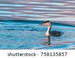 great crested grebe bird... | Shutterstock . vector #758135857