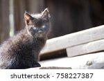 Little Black Barn Kitten On...