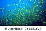 coral reef. diving. underwater...   Shutterstock . vector #758251627