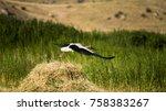 flying stork stork starts to... | Shutterstock . vector #758383267