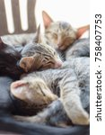 Stock photo three kitten are sleeping together cute animal and pet 758407753