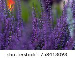 flowers lupine and on the... | Shutterstock . vector #758413093