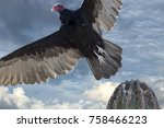 Zopilote Vulture Buzzard Bird...