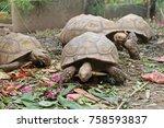 african spurred tortoise... | Shutterstock . vector #758593837