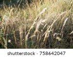 Small photo of field field field