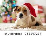 merry christmas. dog jack... | Shutterstock . vector #758647237