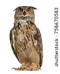 portrait of eurasian eagle owl  ... | Shutterstock . vector #758670583