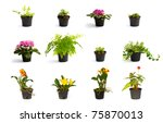 Collection Of Little Plant In ...