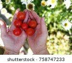 farmer holding fresh tomatoes... | Shutterstock . vector #758747233