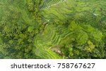 Arial View Of Rice Fields