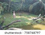 painted stork in green water... | Shutterstock . vector #758768797