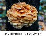 autumn forest. wood mushrooms.... | Shutterstock . vector #758919457