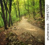 beautiful forest. pathway in... | Shutterstock . vector #758927737